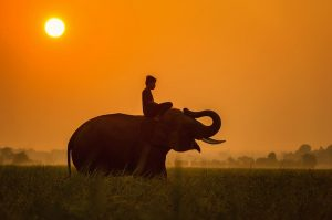 Image is a young boy riding on the back of an elephant in Cambodia.